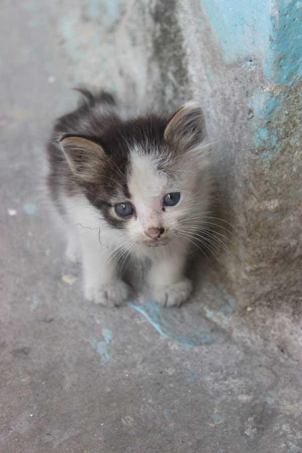 A kitten in Central Havana
