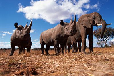 Help Ivory Free Vermont save the elephants