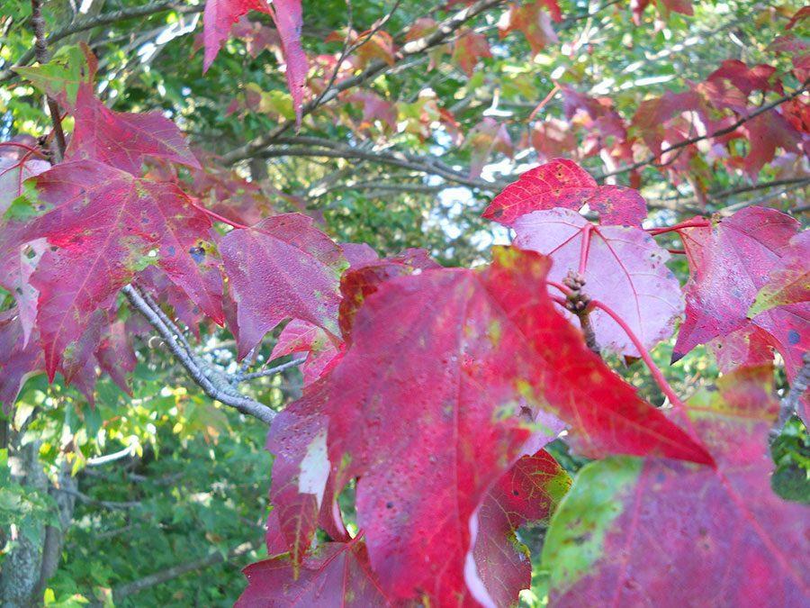 Another season of foliage