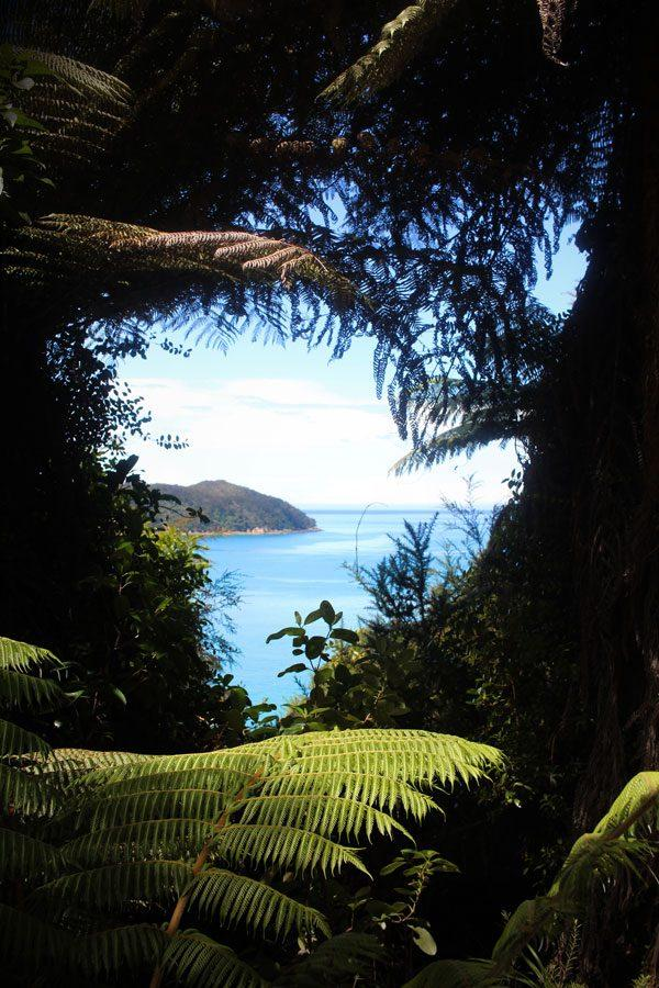 A look the trees at Abel Tasman Nation Park