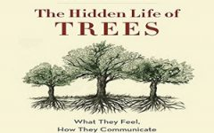New book explores secrets of trees