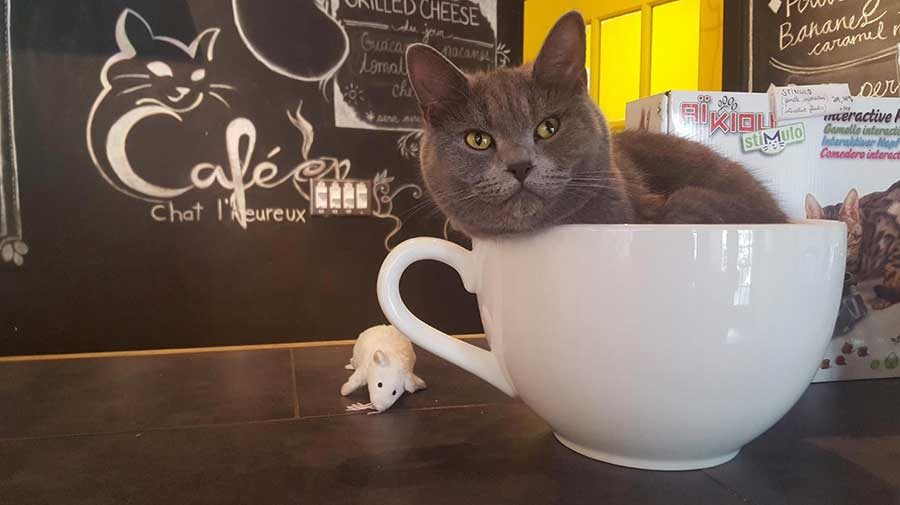 A+nice+cup+of+kitty