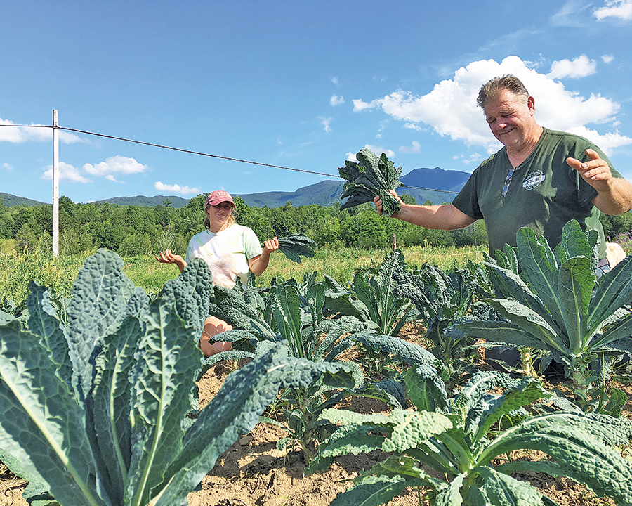Joe Tisbert and his daughter Becky picking kale